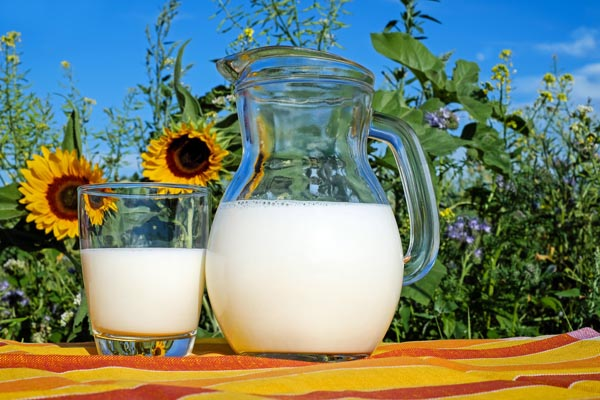 Top Milk Producing Countries in the World