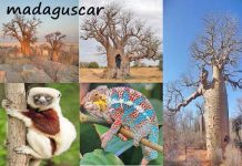 Wildlife of Madagascar Amazing Facts